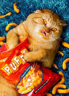 Odihna, regenerare și alimentație echilibrată. Bad kitty!